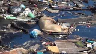 菲律賓海燕颱風  haiyan typhoon attacks philippines