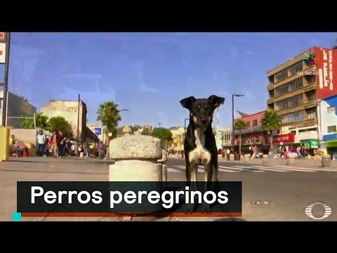 Peregrinos abandonan a sus perros en la Basílica - Al Aire con Paola