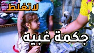 طائر ببغاء يتكلم شوفو شلون يحشش على طفله خبلها