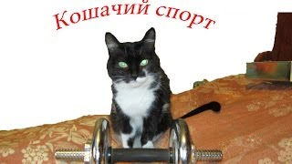 Кошка занимается спортом.