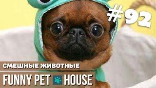 СМЕШНЫЕ ЖИВОТНЫЕ И ПИТОМЦЫ #92 АВГУСТ 2019   Funny Pet House