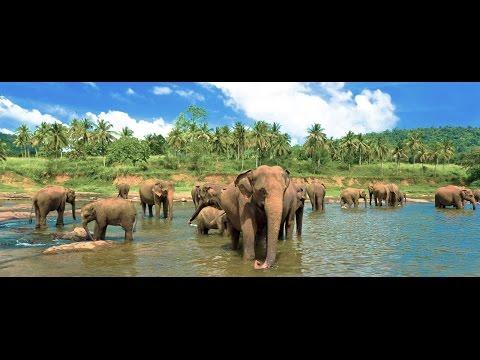 Sri Lanka Trip 2016  | GoPro | Travel