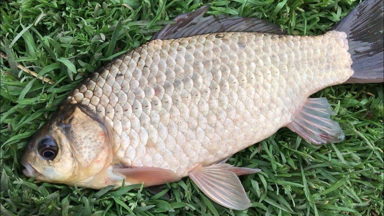 Батл на рыбалке. Убийца карася против кормака от Михалыча. Рыбалка на карася. Рыбалка 2021