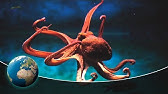 Primeval squids - In the hunting grounds of the mysterious Cephalopods