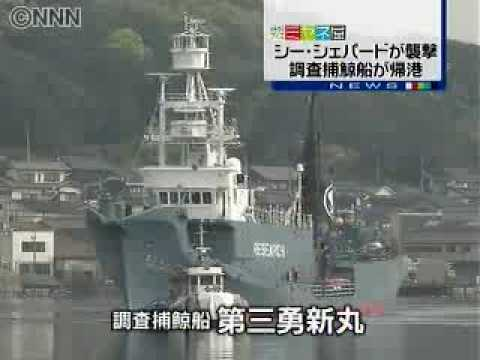 Japanese whaling vessel which were attacked by Sea Shepherd returns harbor