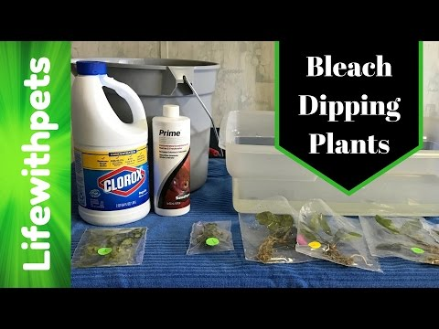 How to Bleach Dip Aquarium Plants