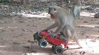 How To Make Fun With Monkeys | Everyday Monkey Funny YouTube Videos From Cambodia thumbnail