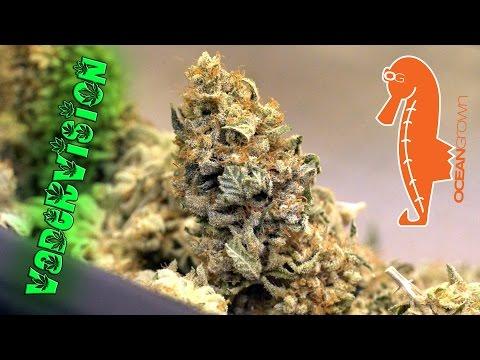Cannabis Male makes the Ultimate Sacrafice!