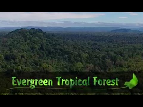 Evergreen Tropical Forest - Documentary Film Production, Cameraman, Aerial Photography Vietnam