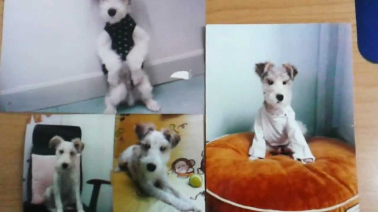 LOST DOG (WIRED FOX TERRIER)- PRINCE EDWARD, HK.mp4 - YouTube