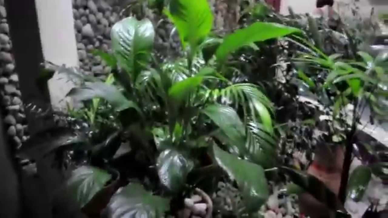 Jardim de Inverno - YouTube