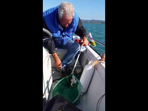 Pesca al polpo ladispoli