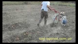 Мотоблок Салют с копалкой Дельфин (Видео 1)(Выкапывание картофеля мотоблоком Салют и копалкой Дельфин-1. Благодаря двояковыпуклой кривизне рабочей..., 2010-03-01T15:09:51.000Z)