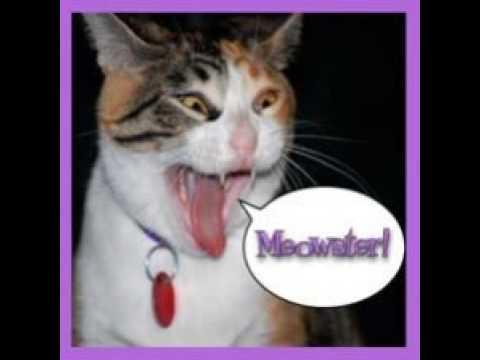 Epidose 86 - Cat Show Documentary