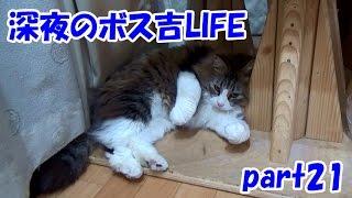 保護猫ボス吉の楽しい深夜時間 part21
