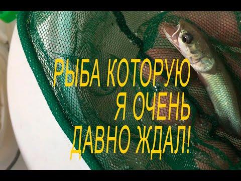 Вопрос: Могут ли рыбки в аквариуме предсказывать погоду?