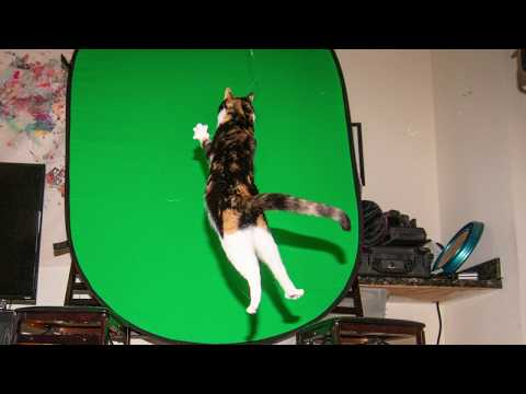 How to Photograph a Jumping Cat