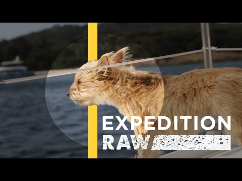 How a Tiny Dog Saved a National Geographic Expedition | Expedition Raw
