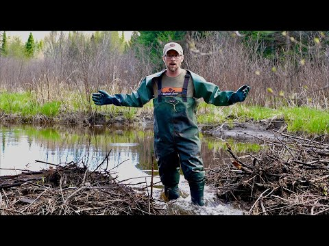 Are the Beavers BACK?!? FLOODING ISSUES at the OFF-GRID Property