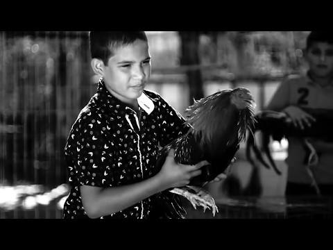 El Gallero Vídeo Oficial  Alfredo Ríos El Komander