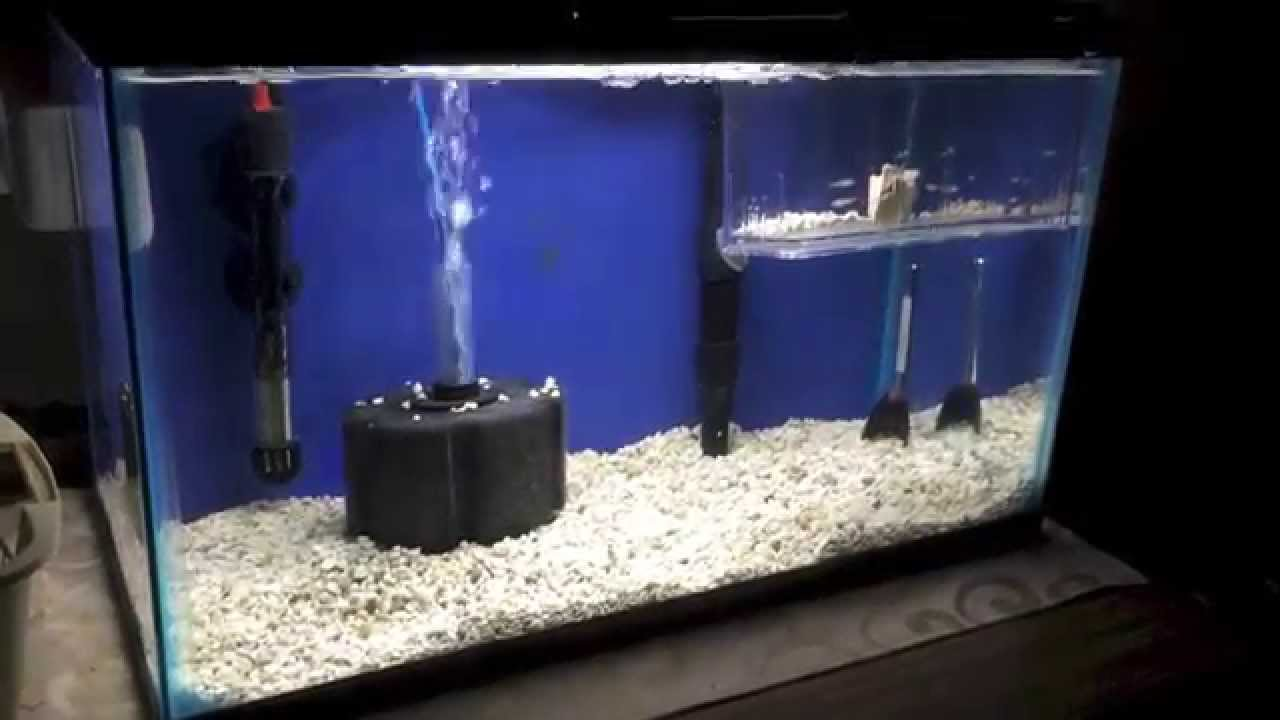 Fish tank quarantine -
