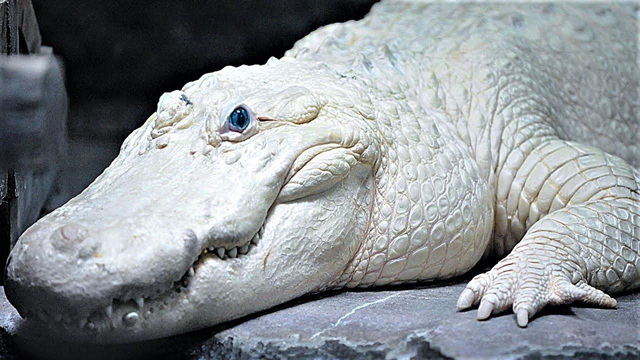 15 most bizarre reptiles youtube
