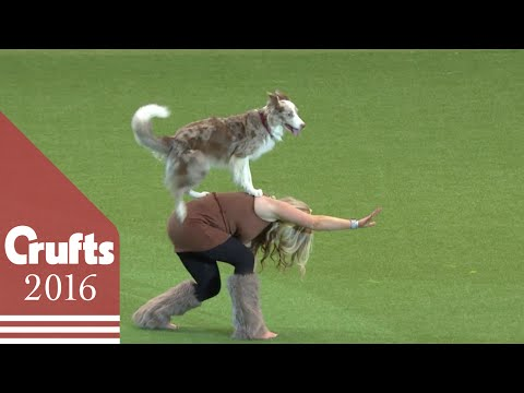 Heelwork to Music Competition Part 2   Crufts 2016