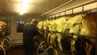 Milking Parlor-Dennis and Elaine Schaaf Dairy Goat Farm