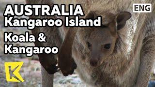 【K】Australia Travel-Kangaroo Island[호주 여행-캥거루섬]코알라&캥거루/Koala/Wallaby/Flinders Chase National Park