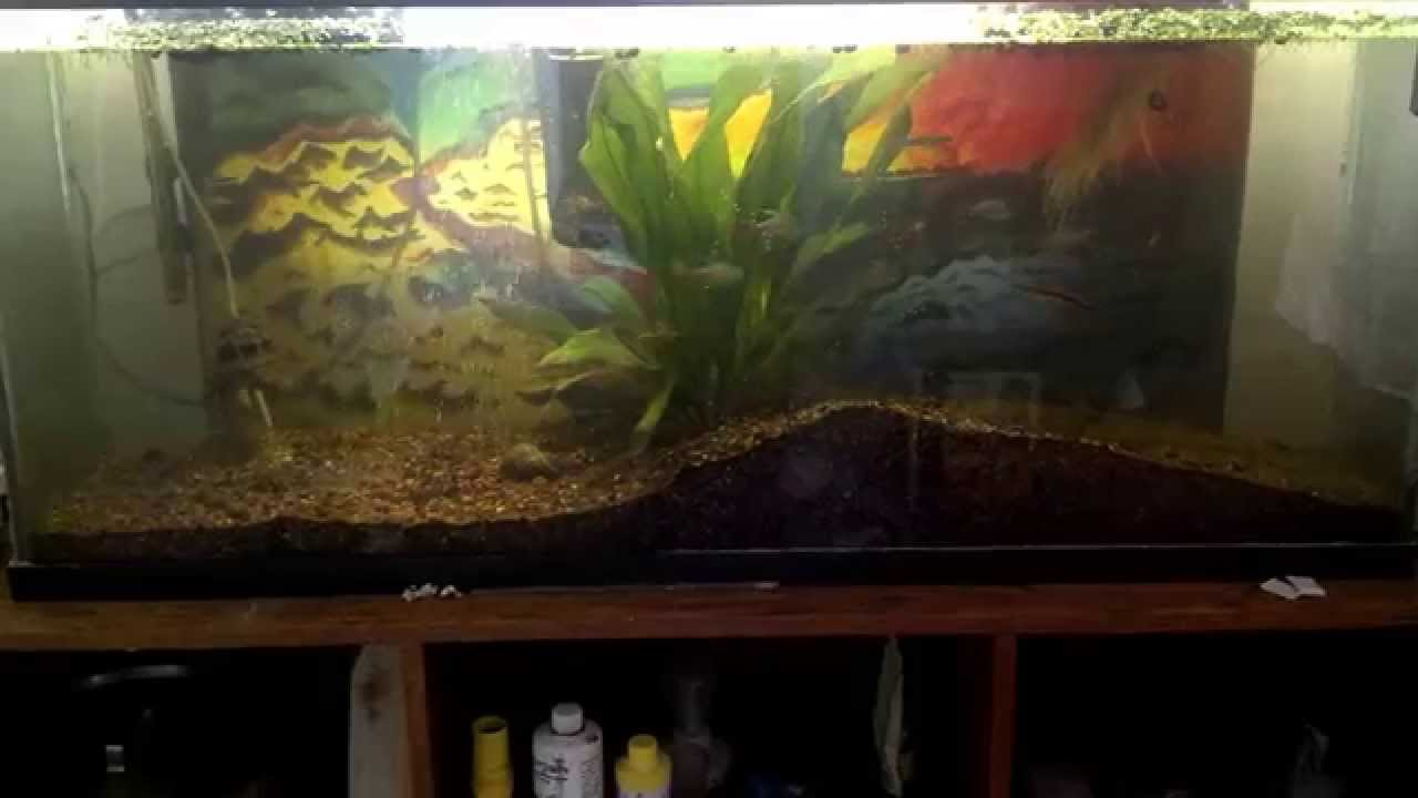 Hydroponic fish aquarium experiment diy youtube for Hydroponic fish tank diy