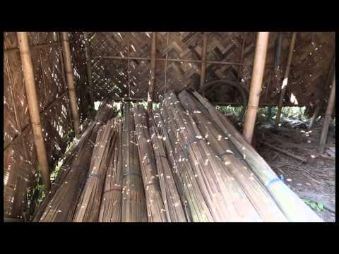 Bamboo AVI