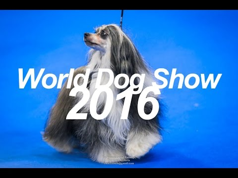 World Dog Show 2016: chinese crested, borzoi, saluki