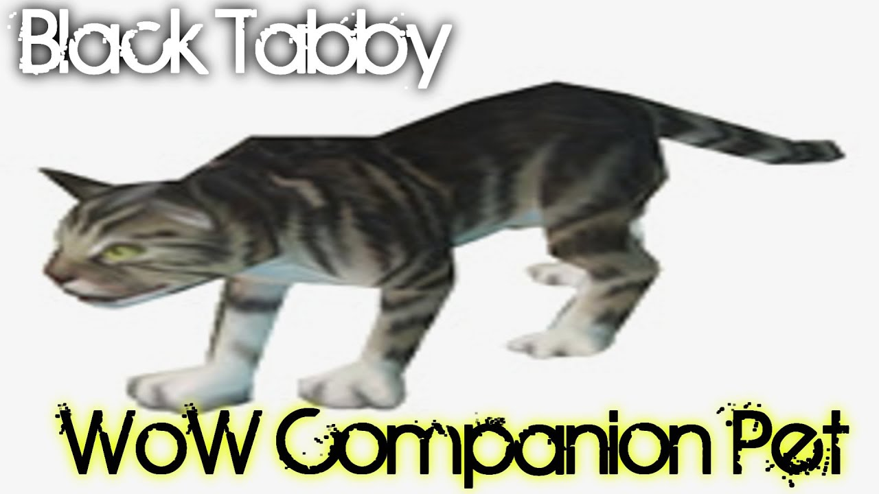 Black tabby cat wow companion pet guide youtube pet cats wow | the.