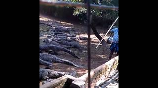 Indian Crocodile hunters