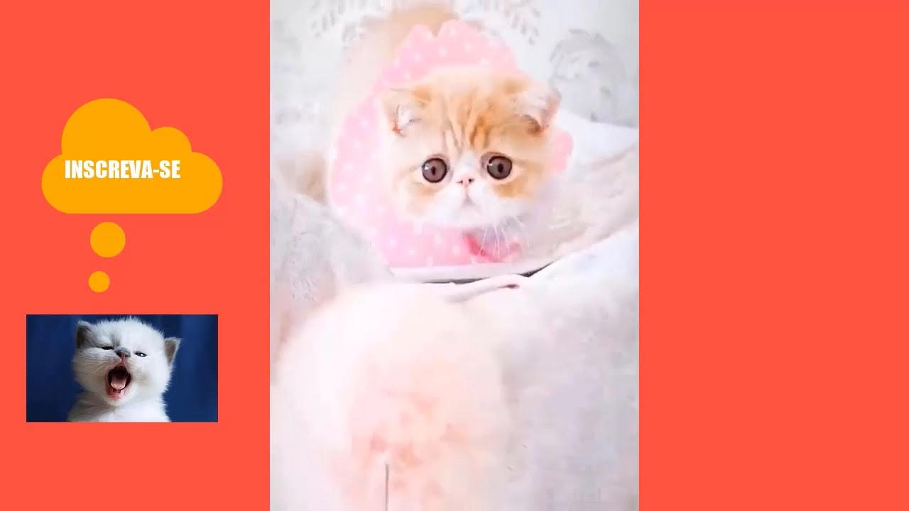 Download gatos engraçados | Tag Your Cat Here - This compilation of smart cats will leave you astonished!