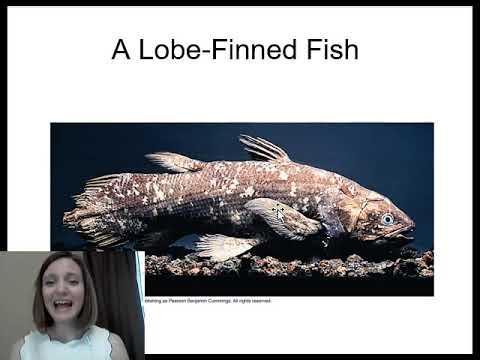 Osteichthyes (bony Fish)