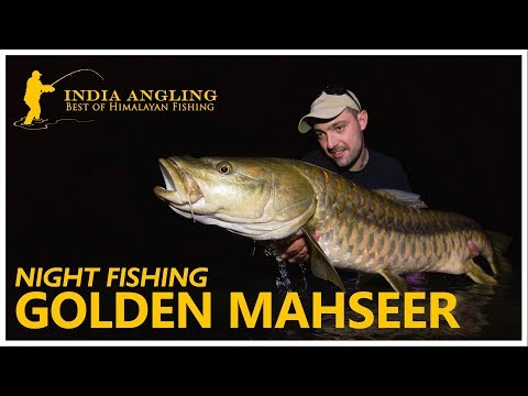 NIGHT FISHING IN RAMGANGA RIVER   GOLDEN MAHSEER   APRIL 17