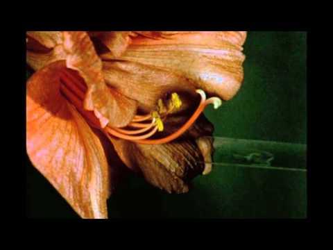 14B. Pollination and Fertilization in a Flowering Plant: Amaryllis