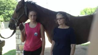 Unofficial Equestrian ASL terms
