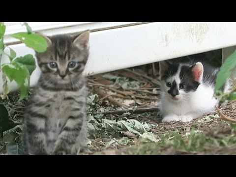 Two Cute Little Feral Kittens