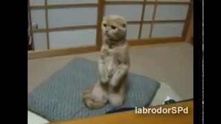 Самые смешные видео про животных!!!СМОТРЕТЬ ВСЕМ (2013)