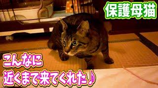 保護猫家猫化 前回のつづき!こんな風になるなんて(泣) Kitten Cat Japanese traditional house