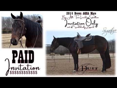 Duit performance horses paid invitation 2014 aqha mare duit performance horses paid invitation 2014 aqha mare invitation only stopboris Choice Image