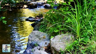 3 HOURS of Relaxing River Sounds - Forest River - Gentle Stream - Nature Sounds - 1080p HD