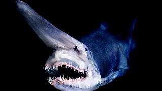 Amazing deep ocean creatures ...