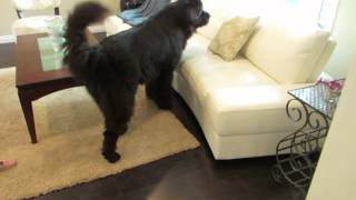Adorable game of hide-and-seek between toddler and dog