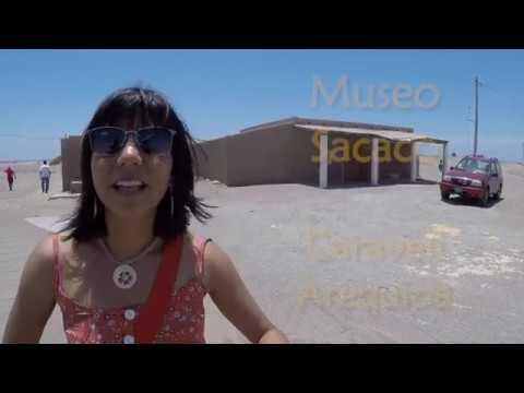 Museo de fósiles en pleno desierto: Sacaco