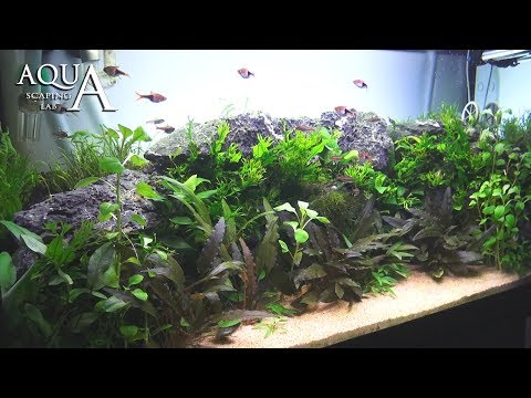 Aquascaping Lab - Tutorial Natural planted Aquarium 'African Wall' (size 80x 35x45h 120L)