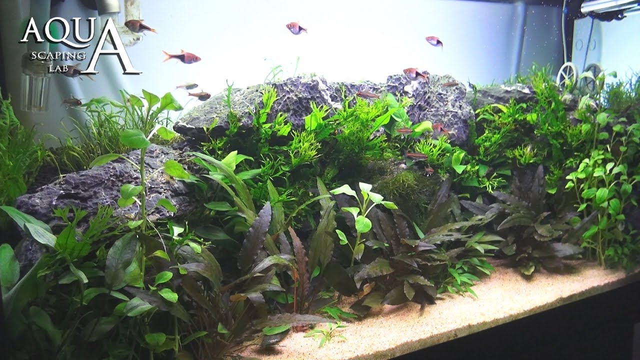 Aquascaping Lab Tutorial Natural Planted Aquarium African Wall