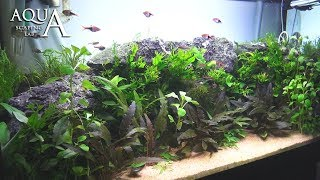 Aquascaping Lab - Tutorial Natural planted Aquarium
